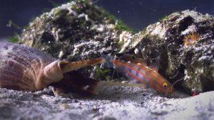 72 Dangerous Animals, episodio acquatico in Australia. Dei pesci vengono predati da un paguro