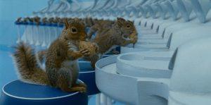 tim burton scoiattoli