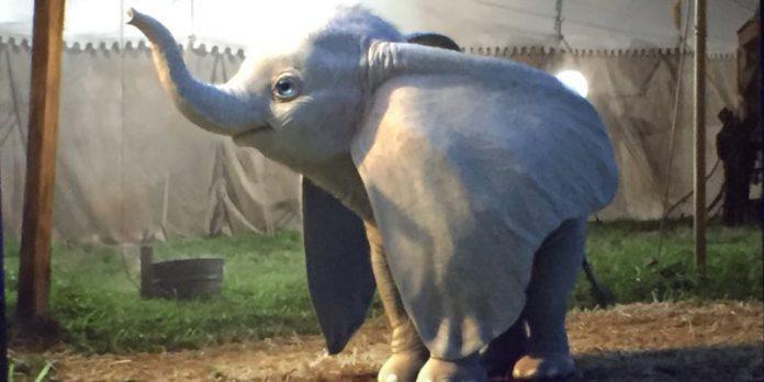Prima immagine live-action Dumbo