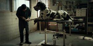 Dogman Garrone Recensione