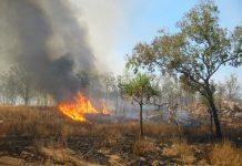 Modella raccoglie soldi per Incendi in Australia