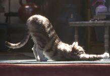 cgi, il gatto di toy story 4