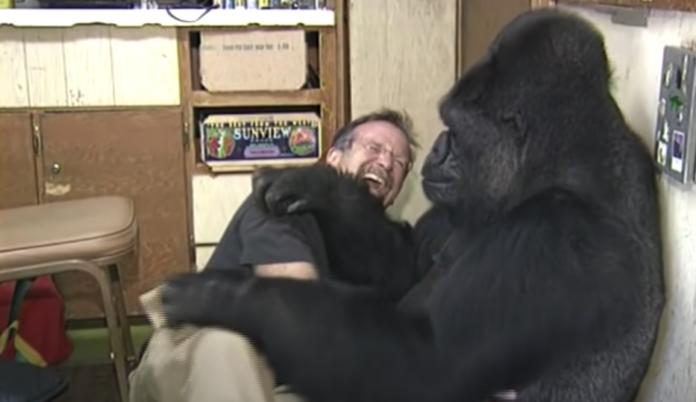 Robin Williams e Koko